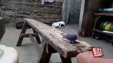 Eğitilen kuşu kedi kaptı