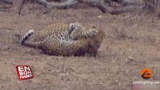 Leoparların savaşı