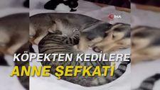 Köpekten kedilere anne şefkati