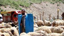 İş bulamayan üniversiteli köyüne dönüp çoban oldu