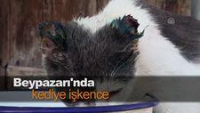 Beypazarı'nda kediye işkence