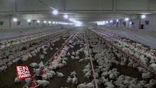 Emekli astsubay devlet desteğiyle çiftlik kurdu