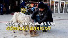 Sokak hayvanlarının gönüllü bakıcısı