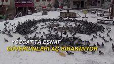 Yozgat'ta esnaf güvercinleri aç bırakmıyor