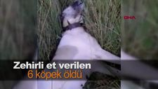 Zehirli et verilen 6 köpek öldü