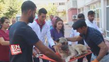 Rahatsızlanan köpeğin imdadına jandarma ve korucular yetişti