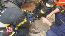 İtfaiyeciler kedileri hayata döndürmek için ter döktü