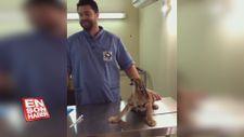 Aşı olmamak için direnen kedi