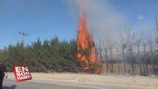 Kaynaktan çıkan kıvılcım çam ağaçlarını yaktı