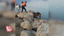 Muğla'da denize düşen köpeği itfaiye kurtardı