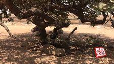 Senegal'de kaplumbağalara ait bir köy: Keur Mbonatt Yi