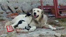 Köpeğe masaj yapan kedi1