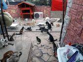 Mersin'de evinde 75 kedi besleyen hayvansever