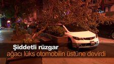 Şiddetli rüzgar, ağacı lüks otomobilin üstüne devirdi