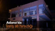 Adana'da yarış atı hırsızlığı