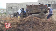 Tezekleri toplayan işçiler günlük 150 TL kazanıyor