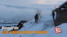 Bingöl'de terk edilen atlara koruma