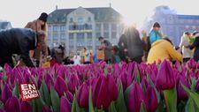 Hollanda'da 'Ulusal Lale Günü' etkinliği