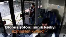Otobüs şoförü minik kediyi ezilmekten kurtardı