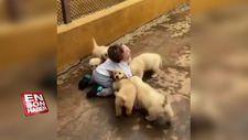Köpeklerin saldırısına uğrayan ufaklık