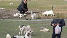 Köyün kedi ve köpekleri muhtara emanet