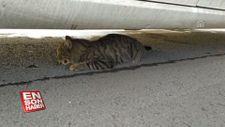 Otomobilin çarpması sonucu yaralanan 'Şanslı' kedi tedavi edilecek