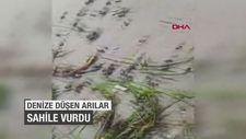 Denize düşen arılar sahile vurdu