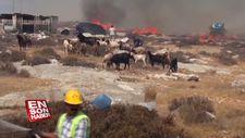 Çıkan yangını söndürmek için vatandaşlar seferber oldu