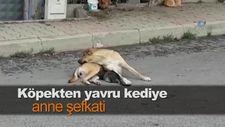 Köpekten yavru kediye anne şefkati