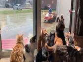 Kediler çiftçiyi pür dikkat izledi