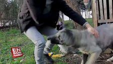 Boğazından yaralanan köpeğe vatandaş sahip çıktı