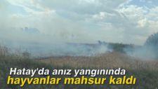 Hatay'da anız yangınında hayvanlar mahsur kaldı