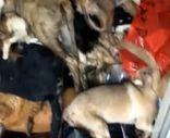 Antalya'daki barınakta hayvanlar çürüdü