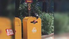 Pet şişeyi çöpe atan kuştan insanları utandıracak hareket