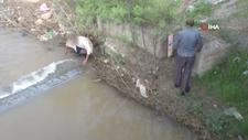 Göç yolculuğunu fırsat bilip elleriyle balık avladılar
