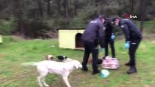 Polis ekipleri, sokak hayvanlarını besledi