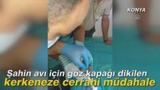 Şahin avı için göz kapağı dikilen kerkeneze cerrahi müdahale