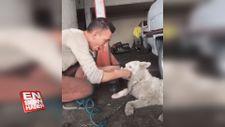 Sahibinin 200 lirasını mideye indiren köpek
