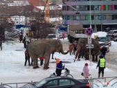 Rusya'da 2 fil sirkten kaçtı