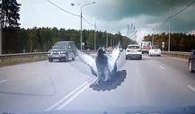 Rusya'da araba kaputunda yolculuk yapan güvercin