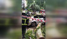İzmit'te çınar arabanın üstüne devrildi
