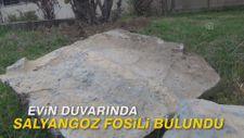 Evin duvarında salyangoz fosili bulundu