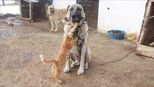 Kangallar ile kedilerin dostluğu