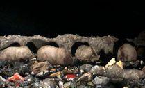 Kars'ta boz ayı ailesi çöplere dadandı