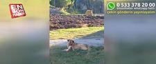 Kars'ta kedi ve köpek dostluğu