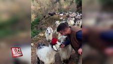 Rizeli çobandan türkü performansı