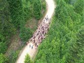 Sakarya'da yaylacıların göç yolculuğu