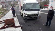 Arnavutköy'de atlarına araba çarptı, 23 bin 467 liralık tebligat geldi