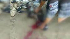 Bursa'da kurbanlık kuzuları, kurtlara yem oldu