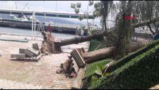 Sarıyer'de kafenin bahçesindeki ağaçlar sokağa devrildi
